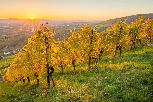 Landschaftsfoto Weinberg im Herbst